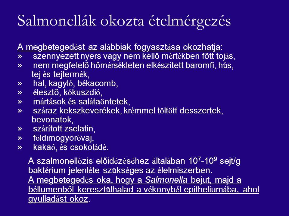 Salmonellák okozta ételmérgezés