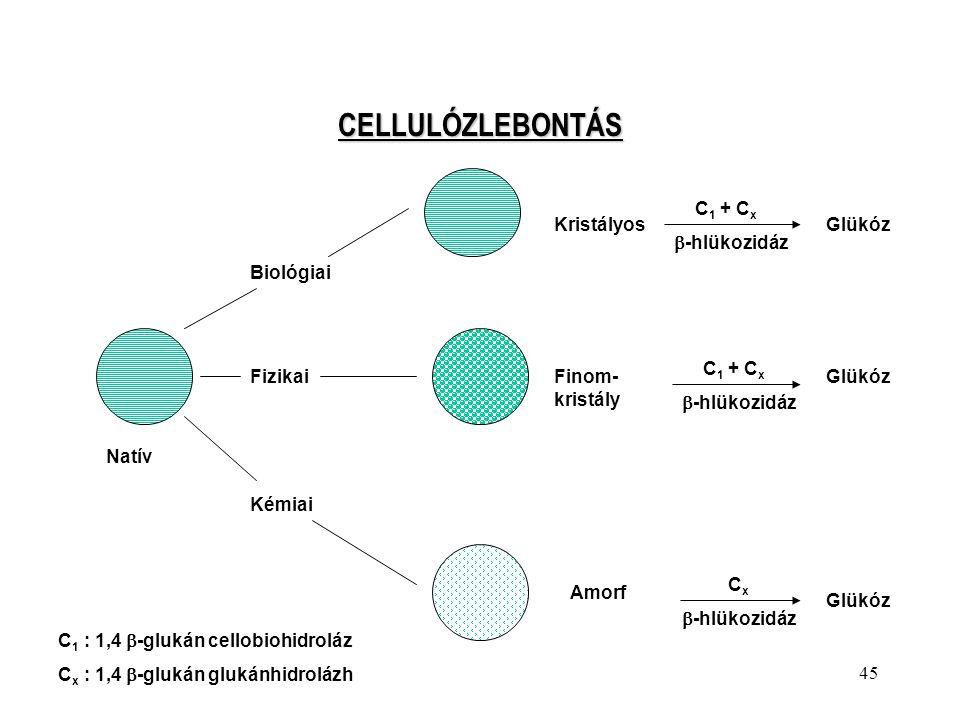 CELLULÓZLEBONTÁS C1 + Cx -hlükozidáz Kristályos Glükóz Biológiai