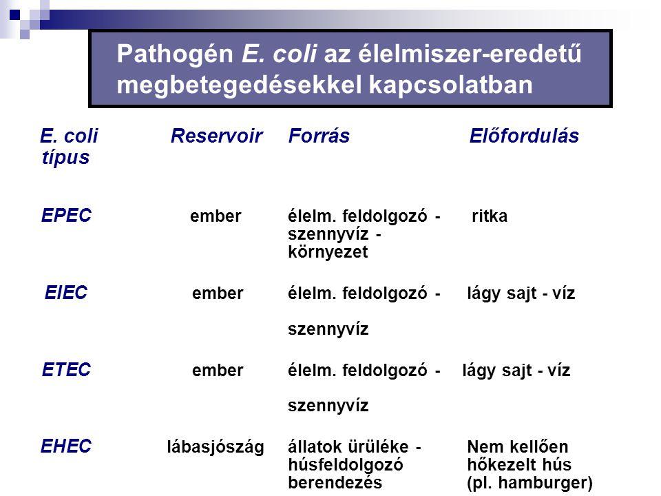 Pathogén E. coli az élelmiszer-eredetű megbetegedésekkel kapcsolatban
