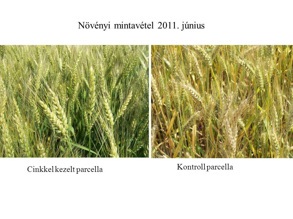Növényi mintavétel 2011. június