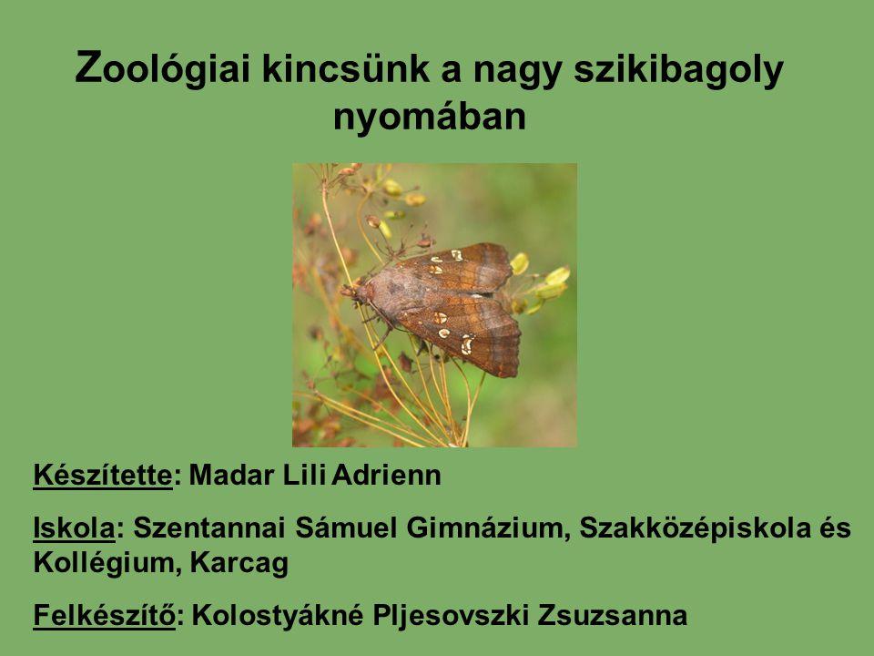 Zoológiai kincsünk a nagy szikibagoly nyomában
