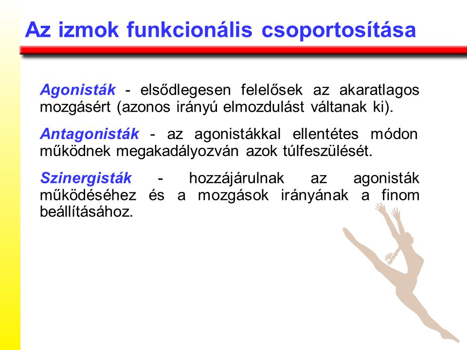 Az izmok funkcionális csoportosítása