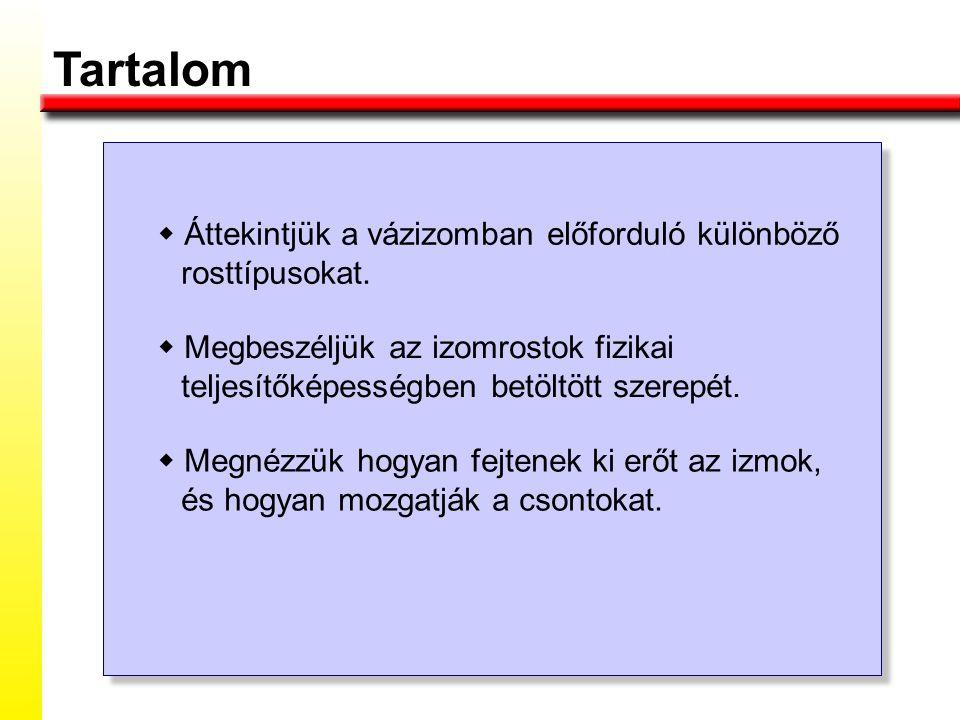 Tartalom w Áttekintjük a vázizomban előforduló különböző rosttípusokat.