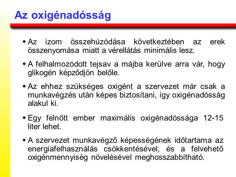 Az oxigénadósság w Az izom összehúzódása következtében az erek összenyomása miatt a vérellátás minimális lesz.
