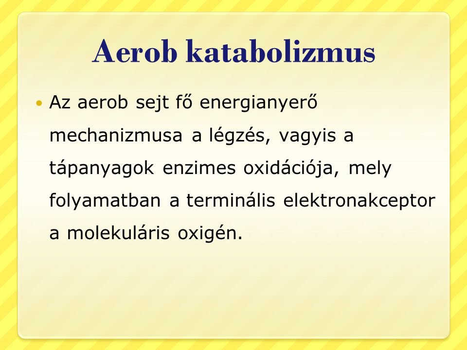 Aerob katabolizmus