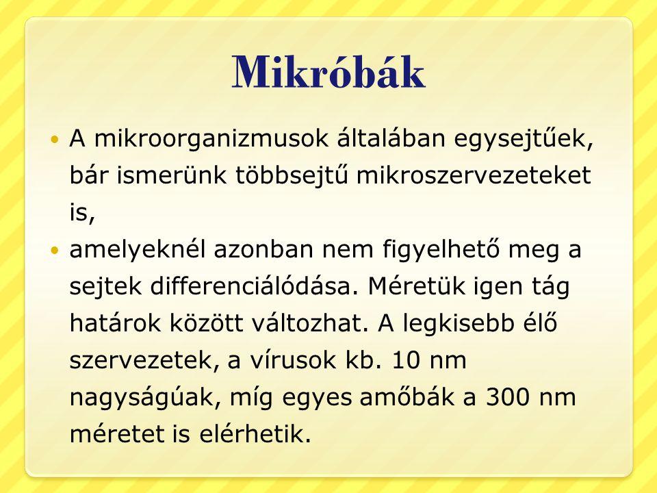 Mikróbák A mikroorganizmusok általában egysejtűek, bár ismerünk többsejtű mikroszervezeteket is,