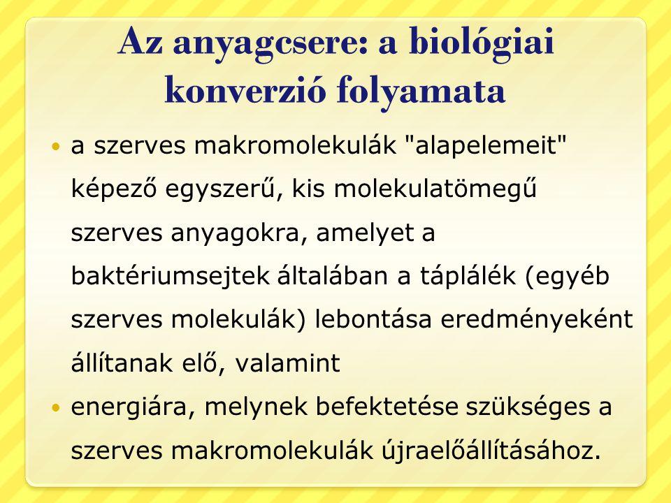 Az anyagcsere: a biológiai konverzió folyamata