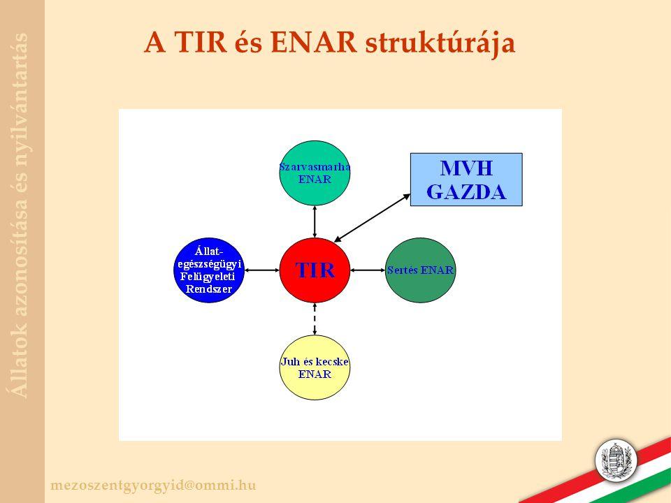 A TIR és ENAR struktúrája