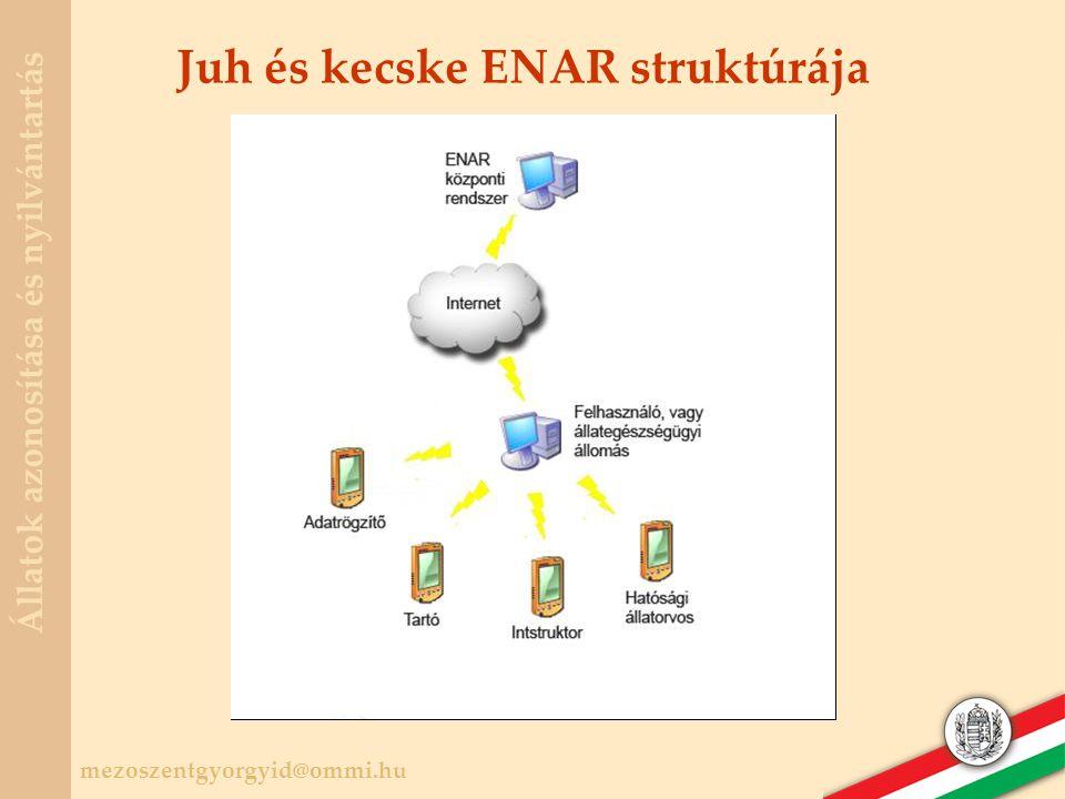 Juh és kecske ENAR struktúrája