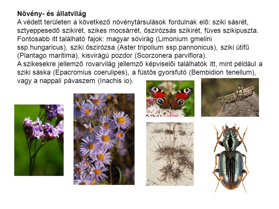 Növény- és állatvilág