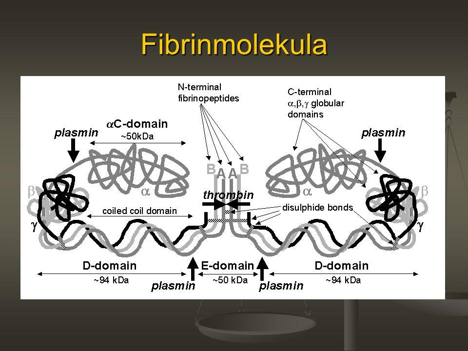 Fibrinmolekula
