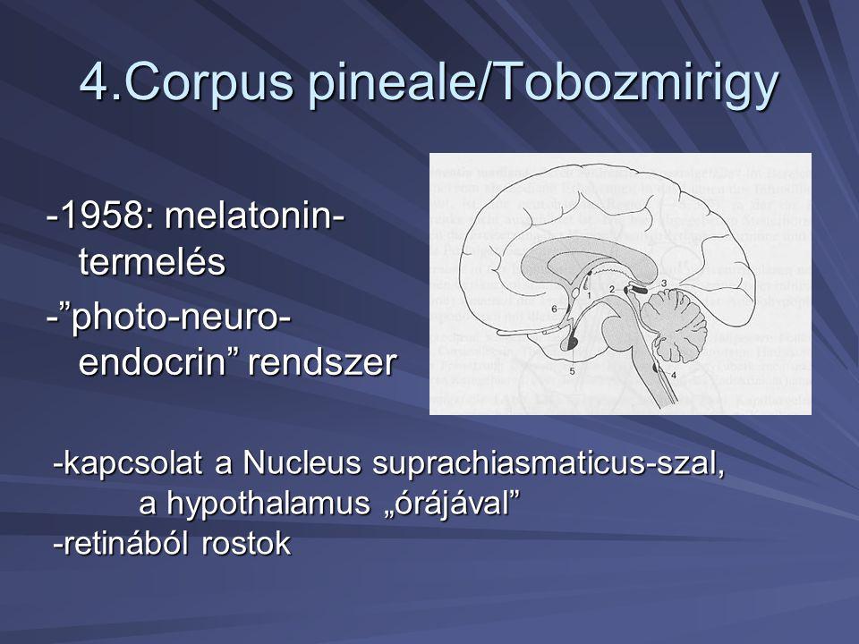 4.Corpus pineale/Tobozmirigy