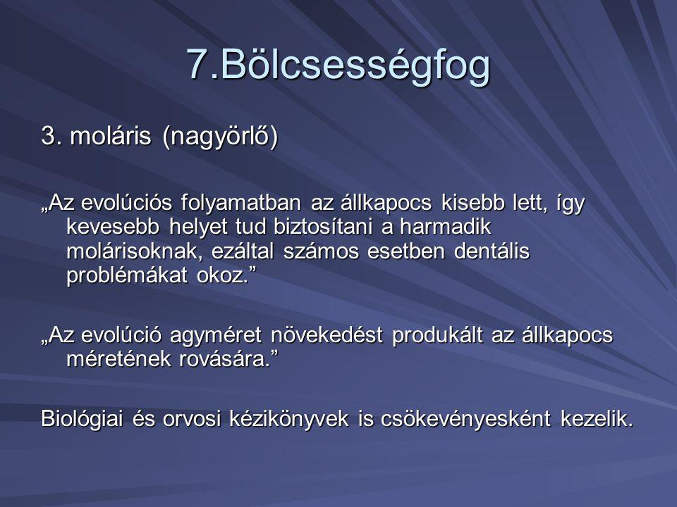 7.Bölcsességfog 3. moláris (nagyörlő)