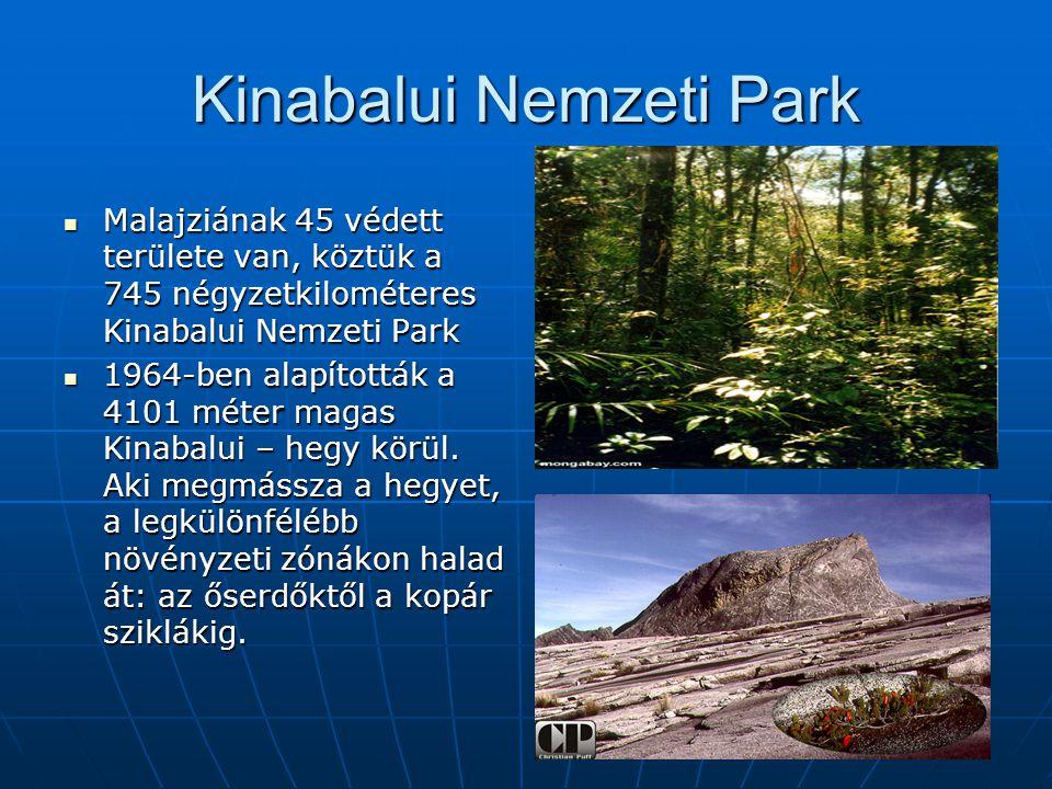 Kinabalui Nemzeti Park