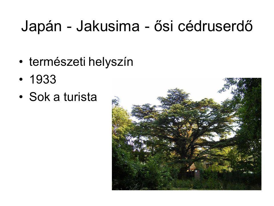 Japán - Jakusima - ősi cédruserdő