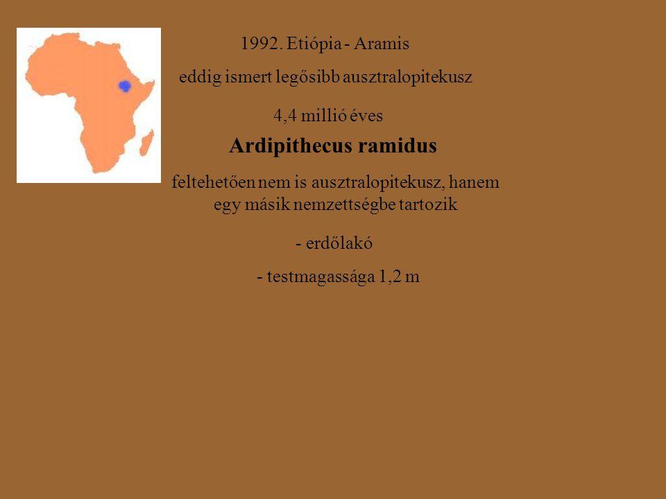 Ardipithecus ramidus 1992. Etiópia - Aramis
