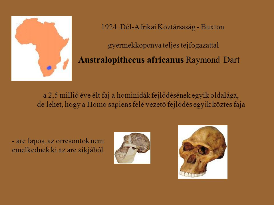 Australopithecus africanus Raymond Dart