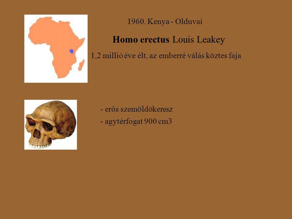 Homo erectus Louis Leakey