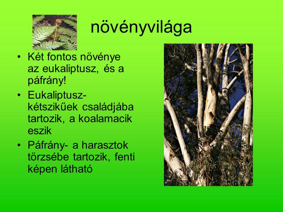 növényvilága Két fontos növénye az eukaliptusz, és a páfrány!