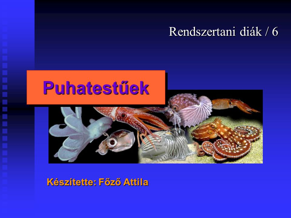 Rendszertani diák / 6 Puhatestűek Készítette: Főző Attila