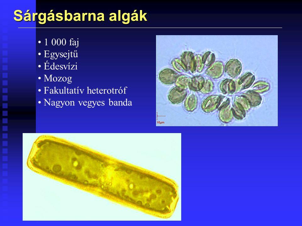Sárgásbarna algák 1 000 faj Egysejtű Édesvízi Mozog