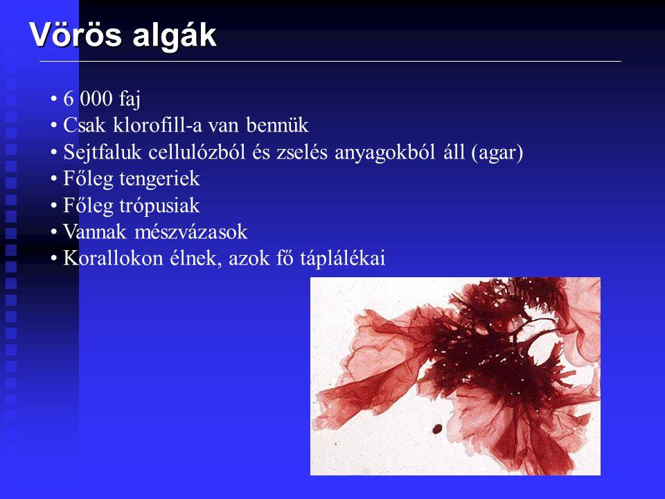 Vörös algák 6 000 faj Csak klorofill-a van bennük
