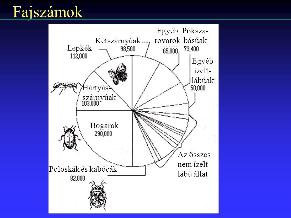 Fajszámok Egyéb Póksza- rovarok básúak Kétszárnyúak Lepkék Egyéb
