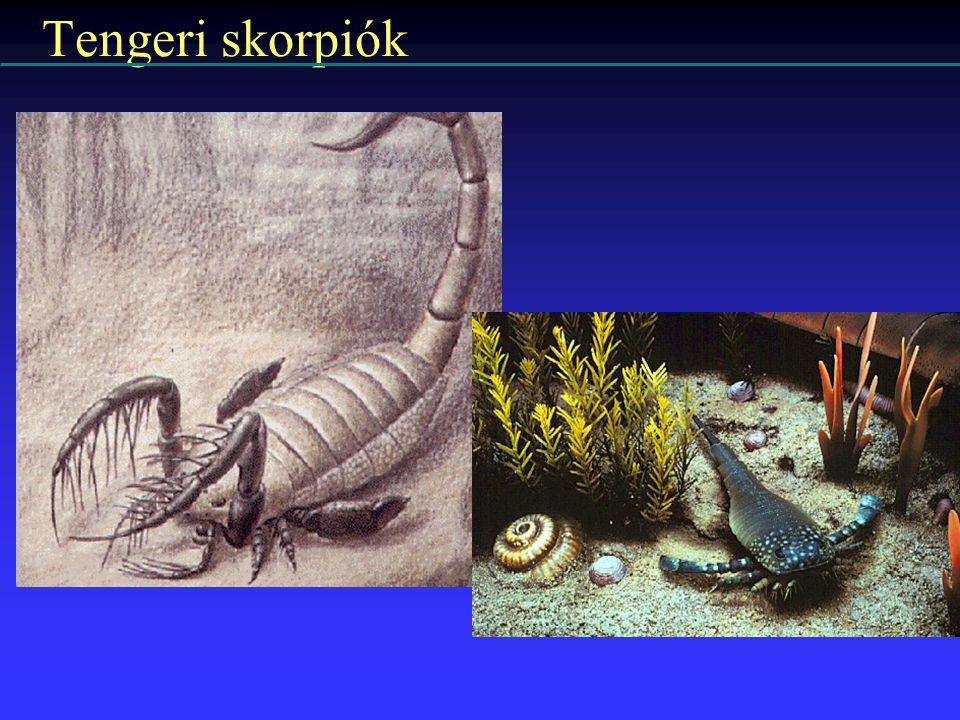 Tengeri skorpiók