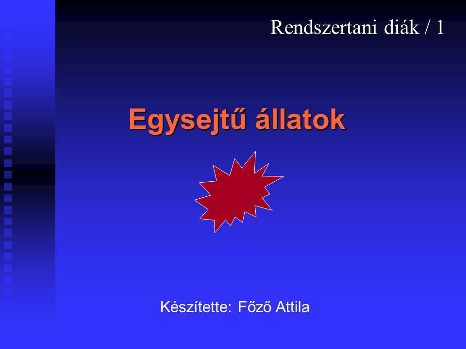 Rendszertani diák / 1 Egysejtű állatok Készítette: Főző Attila