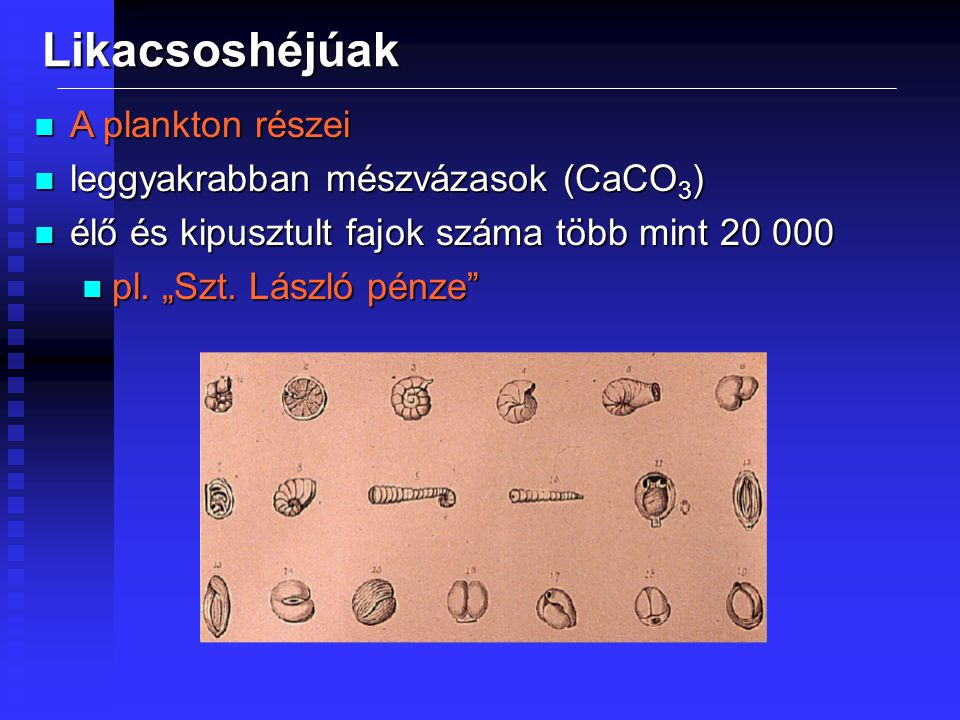 Likacsoshéjúak A plankton részei leggyakrabban mészvázasok (CaCO3)