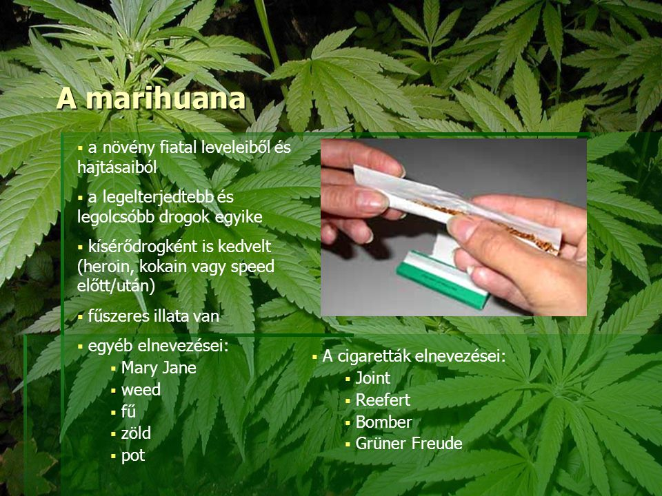 A marihuana a növény fiatal leveleiből és hajtásaiból