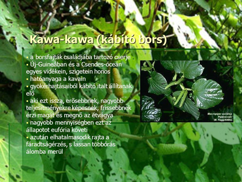 Kawa-kawa (kábító bors)