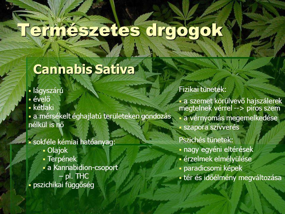Természetes drgogok Cannabis Sativa Fizikai tünetek: lágyszárú