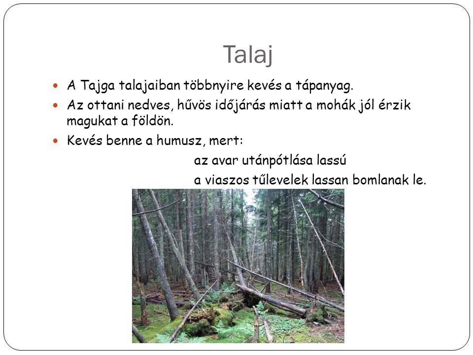 Talaj A Tajga talajaiban többnyire kevés a tápanyag.