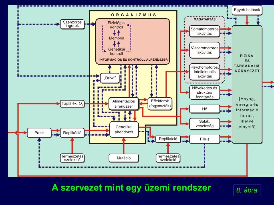 A szervezet mint egy üzemi rendszer