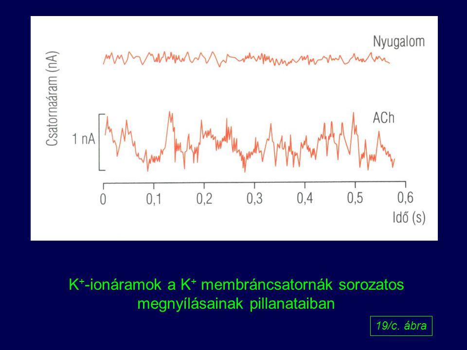 K+-ionáramok a K+ membráncsatornák sorozatos megnyílásainak pillanataiban