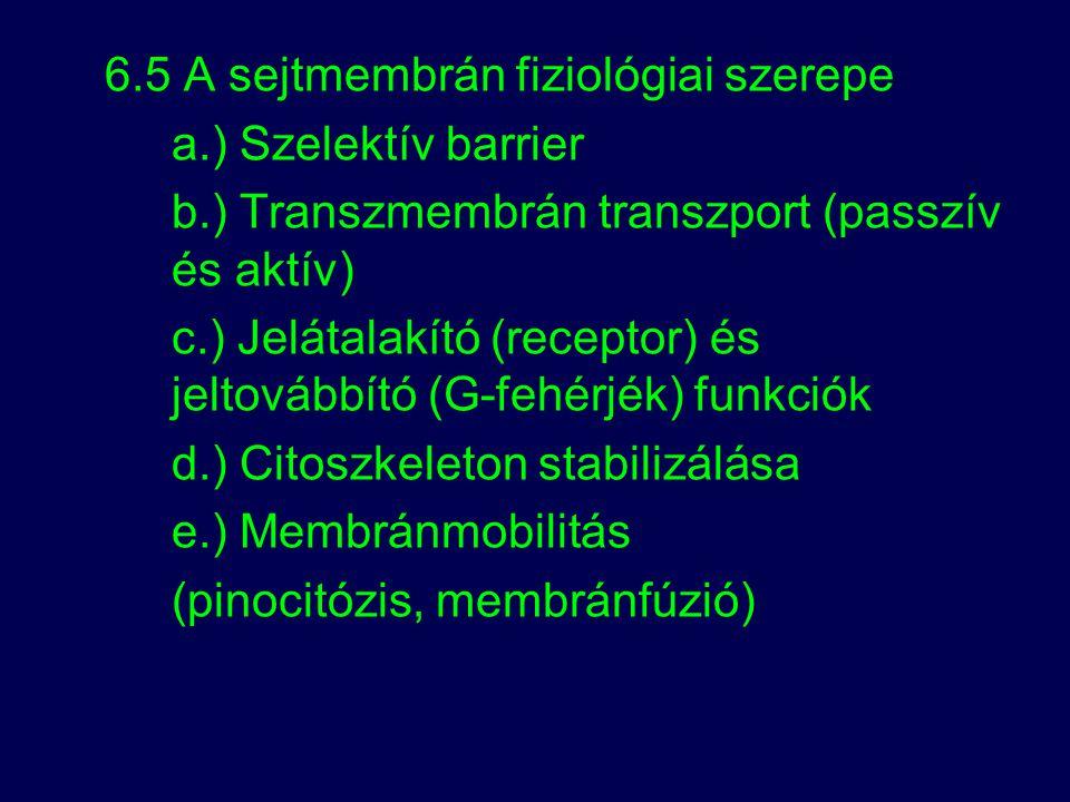 6.5 A sejtmembrán fiziológiai szerepe