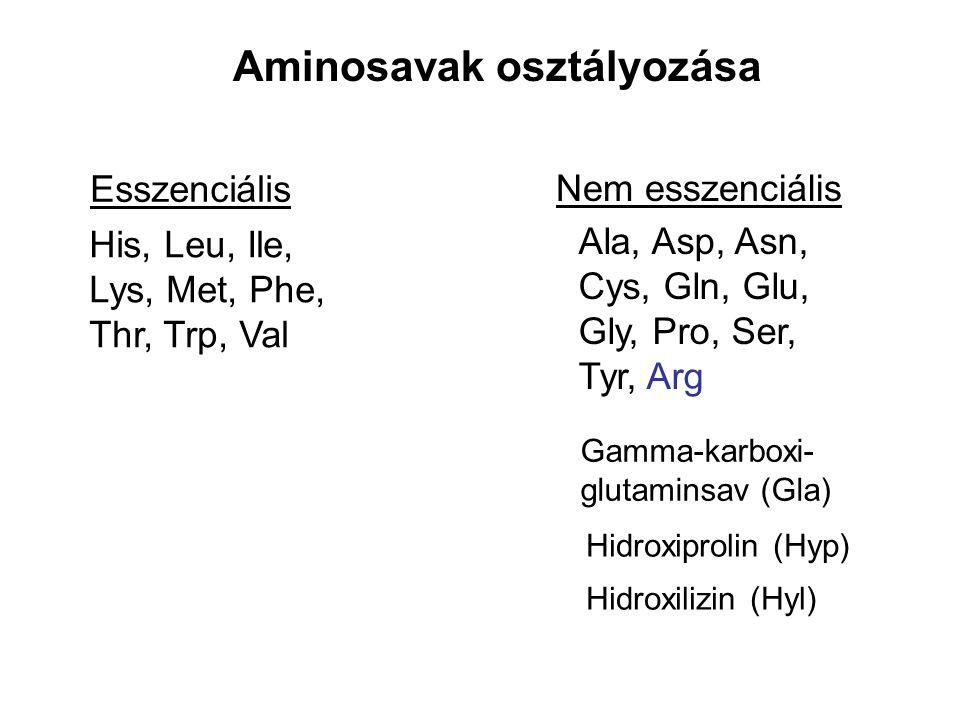 Aminosavak osztályozása
