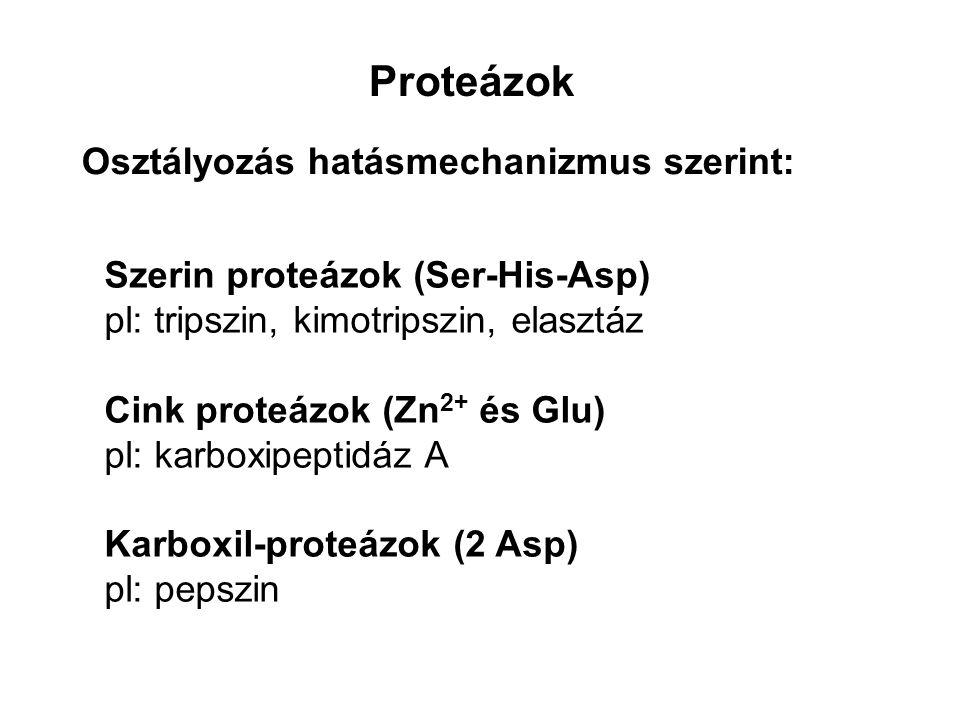 Proteázok Osztályozás hatásmechanizmus szerint: