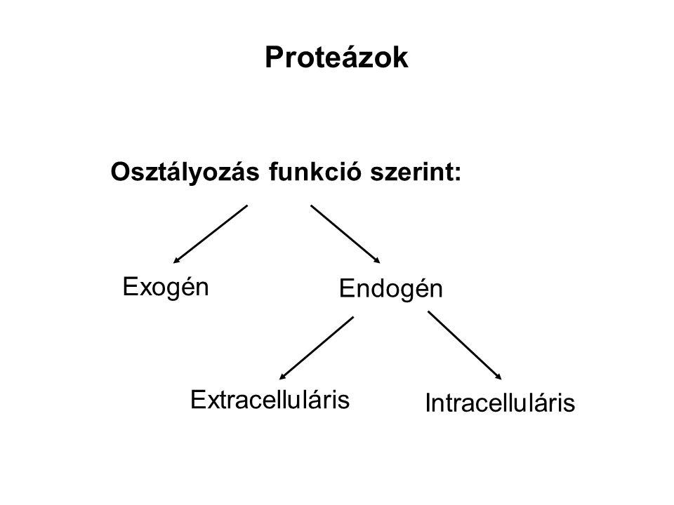 Proteázok Osztályozás funkció szerint: Exogén Endogén Extracelluláris