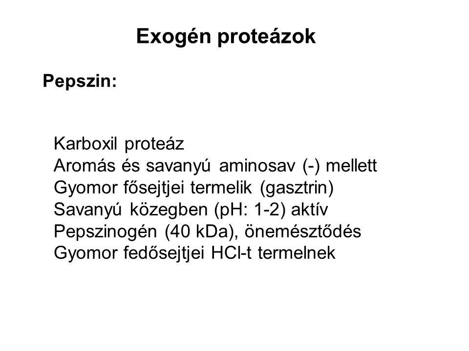 Exogén proteázok Pepszin: Karboxil proteáz