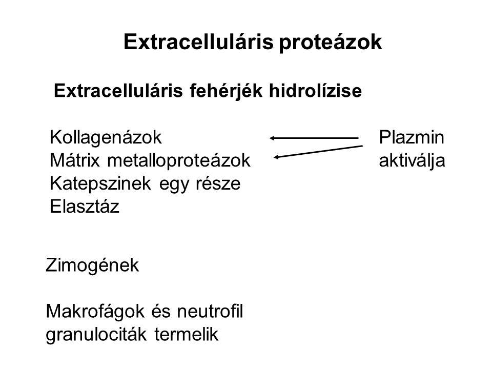 Extracelluláris proteázok