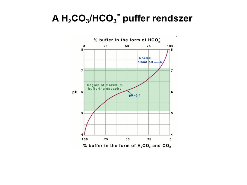 A H2CO3/HCO3- puffer rendszer