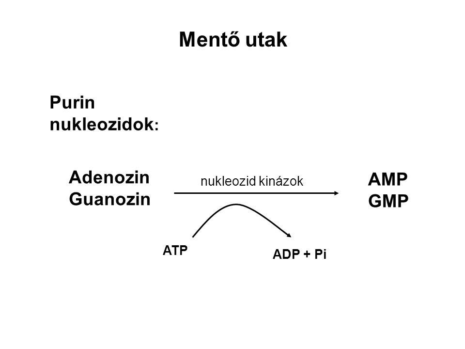 Mentő utak Purin nukleozidok: Adenozin AMP Guanozin GMP