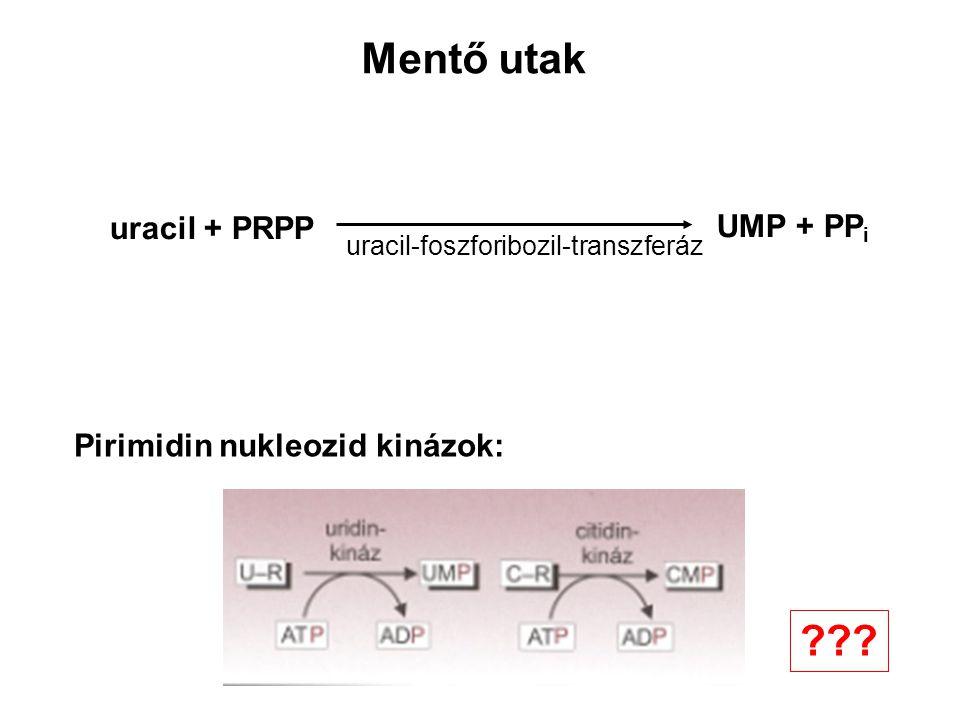 Mentő utak uracil + PRPP UMP + PPi Pirimidin nukleozid kinázok: