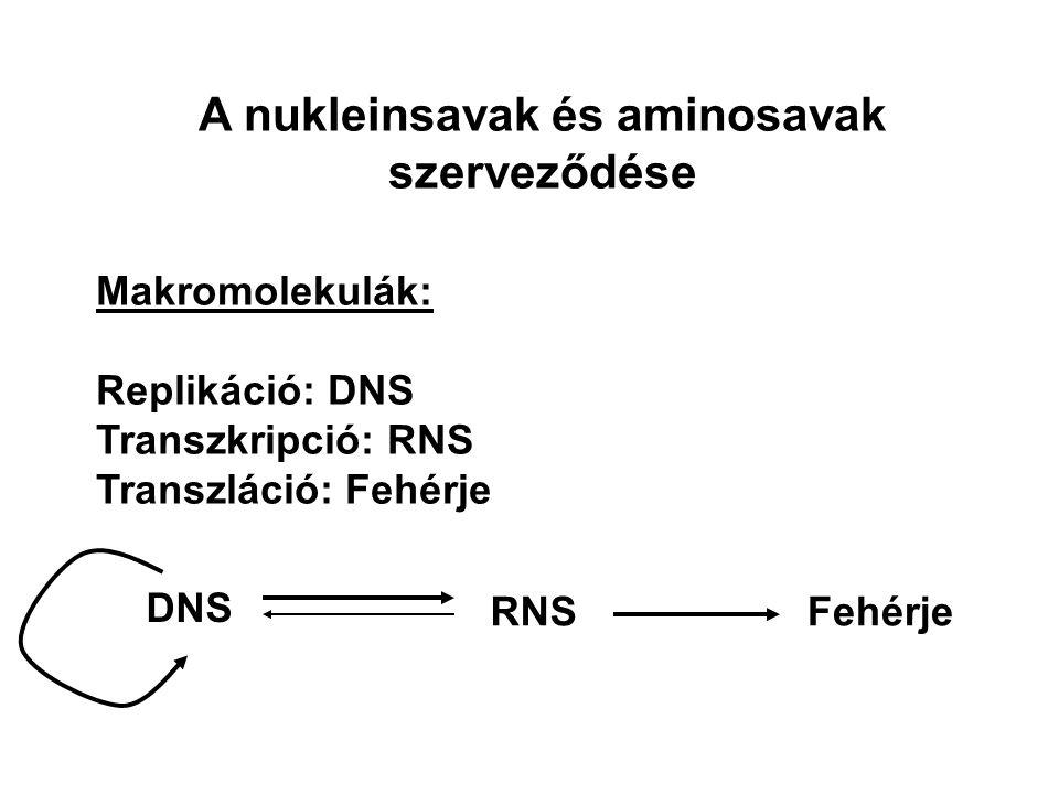 A nukleinsavak és aminosavak