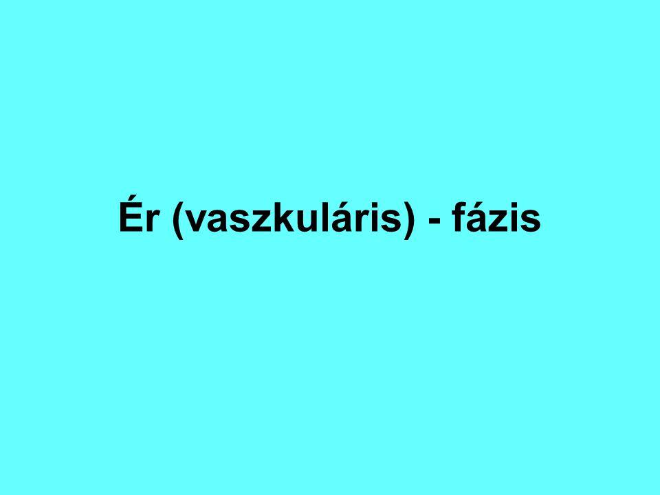 Ér (vaszkuláris) - fázis