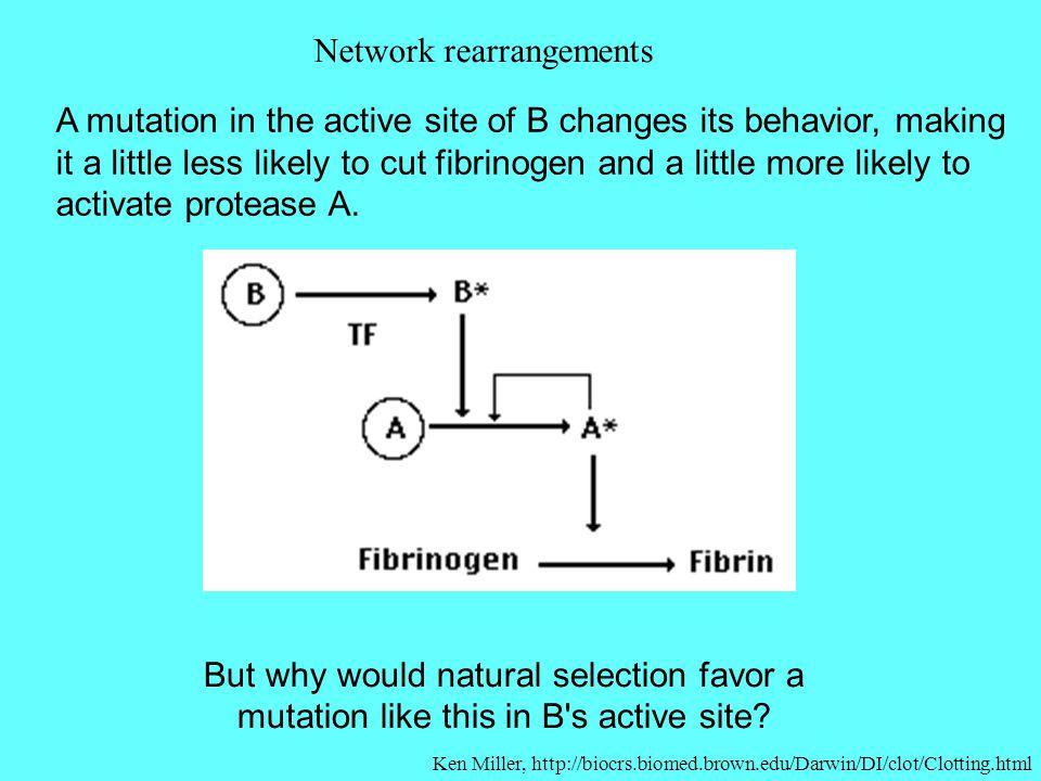 Network rearrangements
