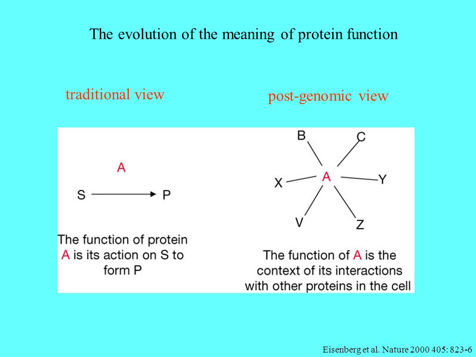 The evolution of the meaning of protein function