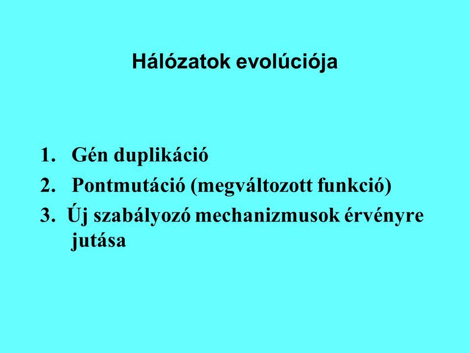 Hálózatok evolúciója Gén duplikáció. Pontmutáció (megváltozott funkció) 3.